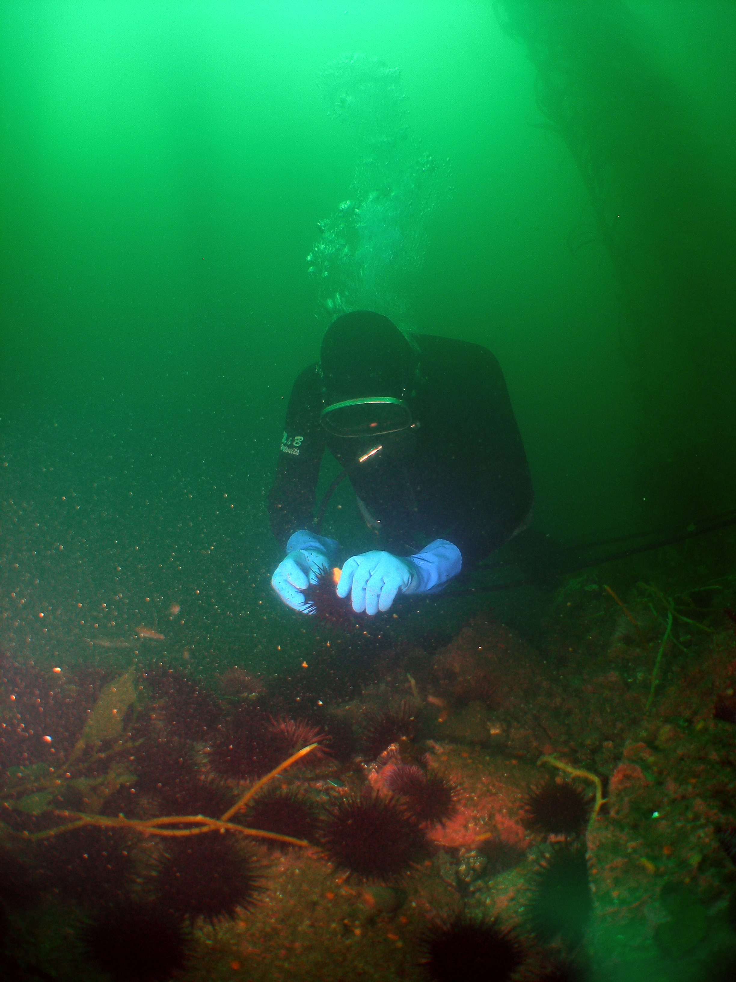 Diver collecting fisheries data