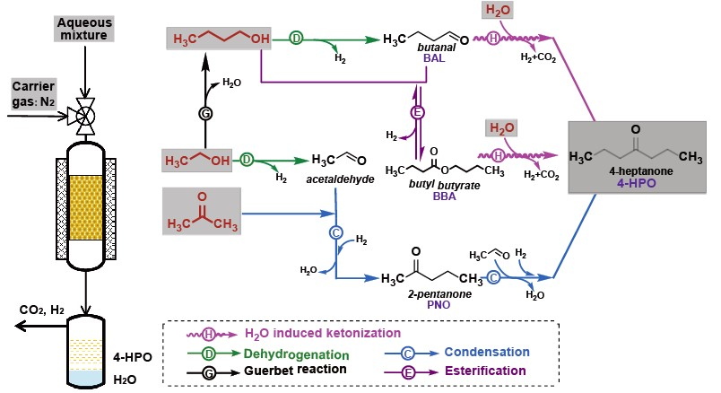 Proposed reaction pathways leading to 4-HPO with ABE solution as feedstock