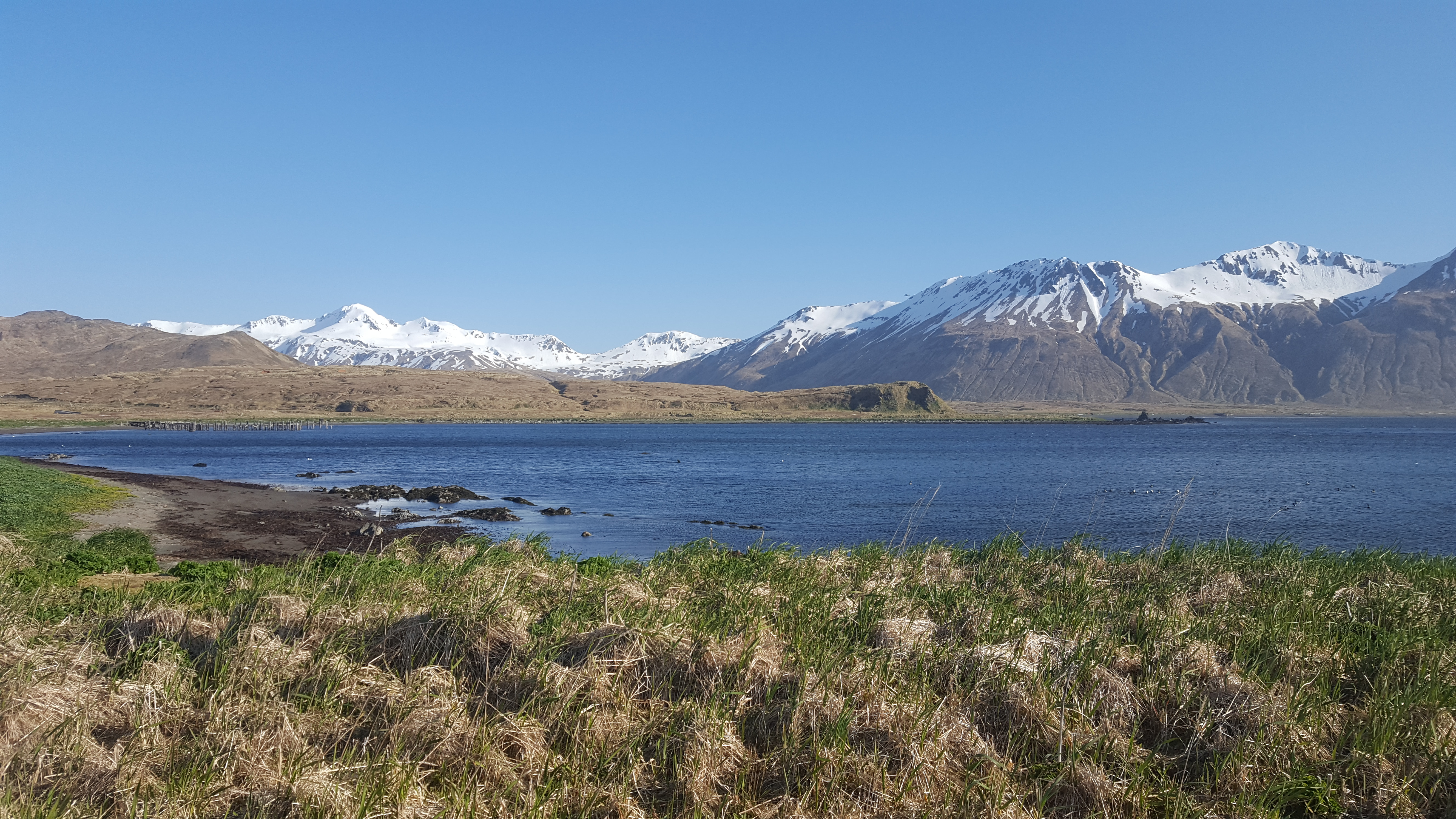 The Aleutian islands are one place where our paper describes ancient DNA from