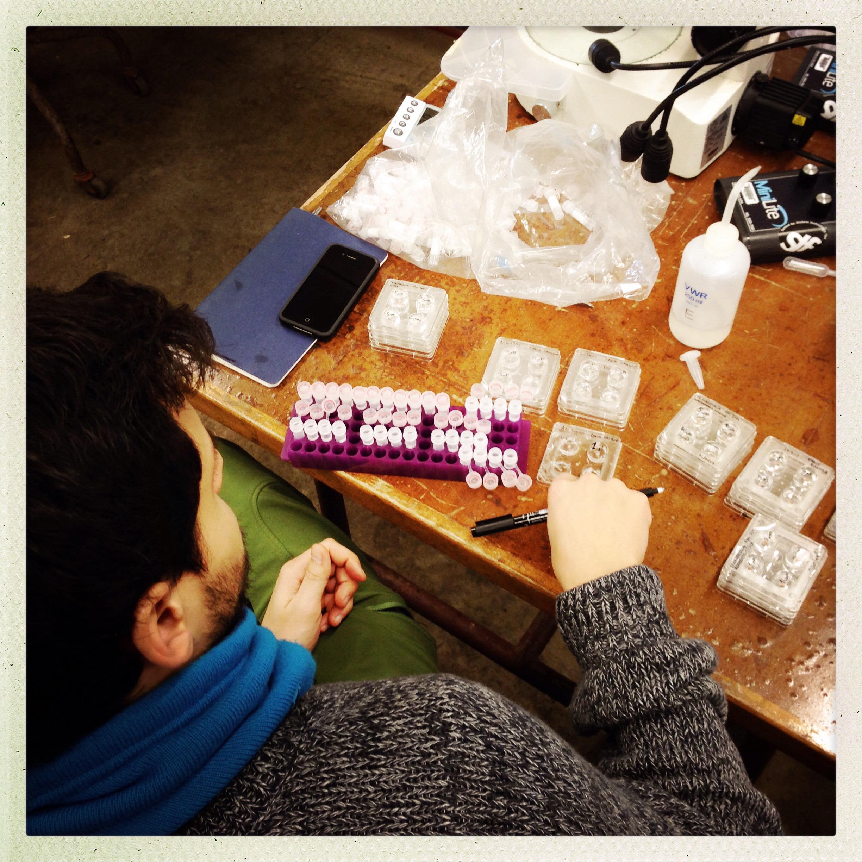 Fixing samples