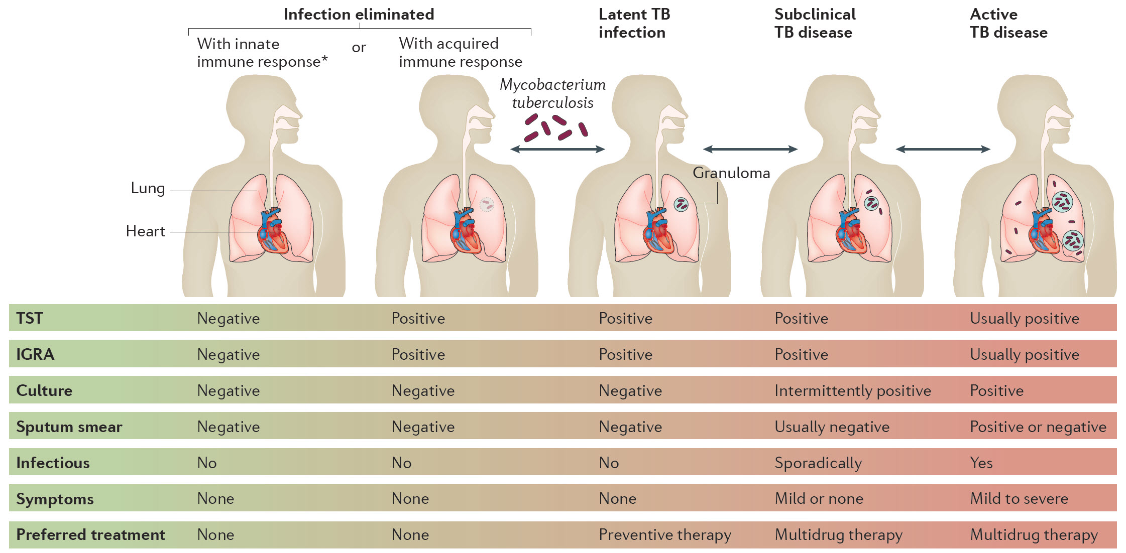 public health disease management of tuberculosis All available public health measures must be implemented when these diseases converge, starting with dots, the essential package of tuberculosis-control intervention based on diagnosis and .