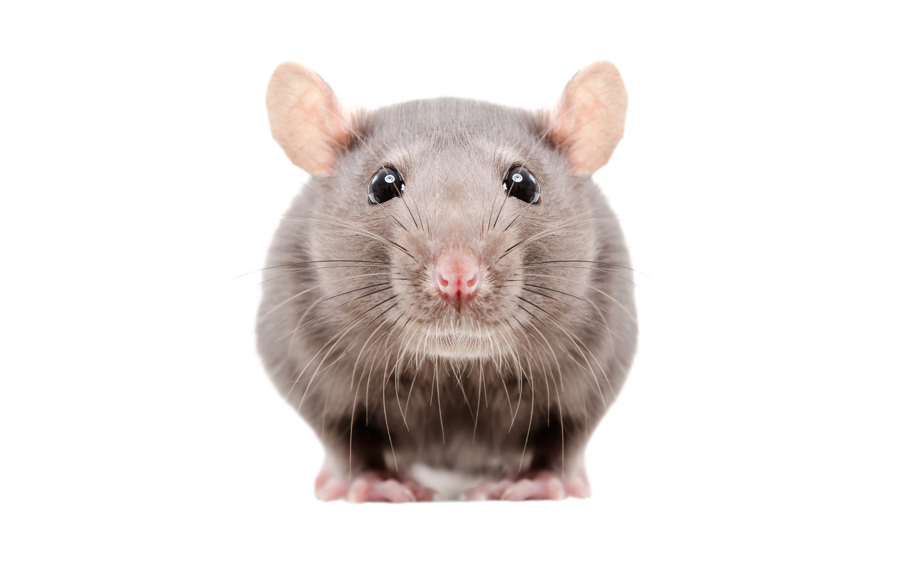 Rodent Control and Food Safety in a Food Service Business