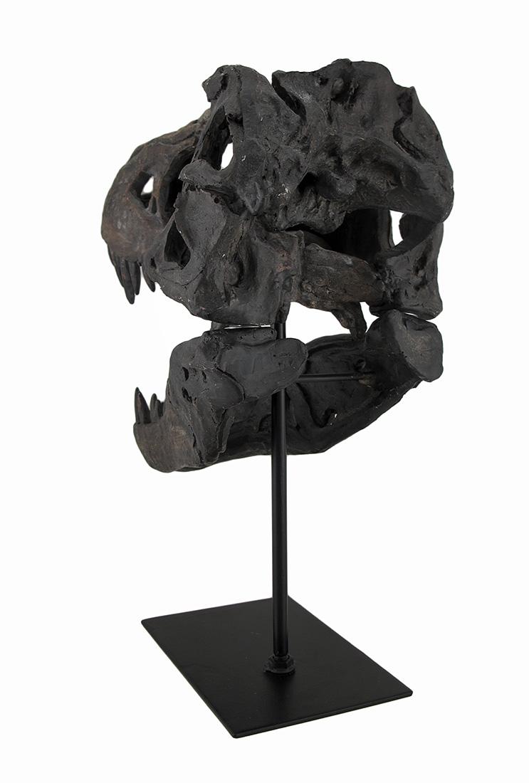 CON-07590-polyresin-tyrannosaurus-rex-skull-statue-4I.jpg