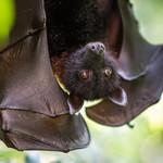 Fruitbats-profile_image-441c44ca2627e5da-150x150