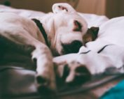 Physical, Mental, and Emotional Benefits of Sleep | Cannon Fitness and Performance