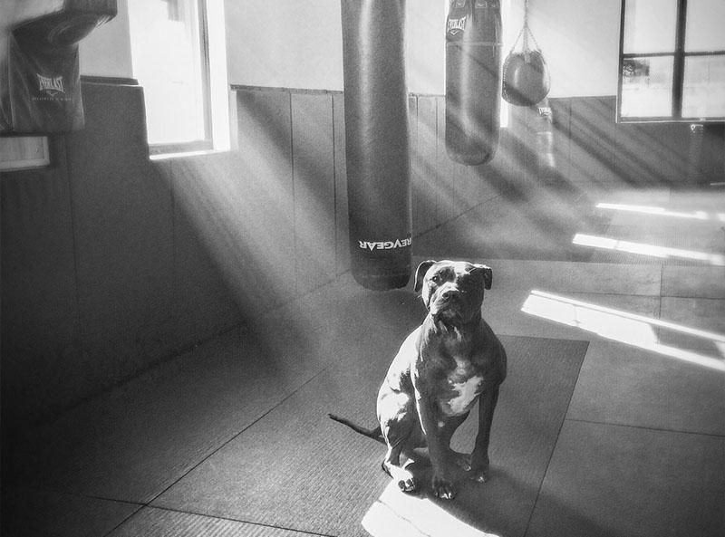 Musashi the Gym Dog