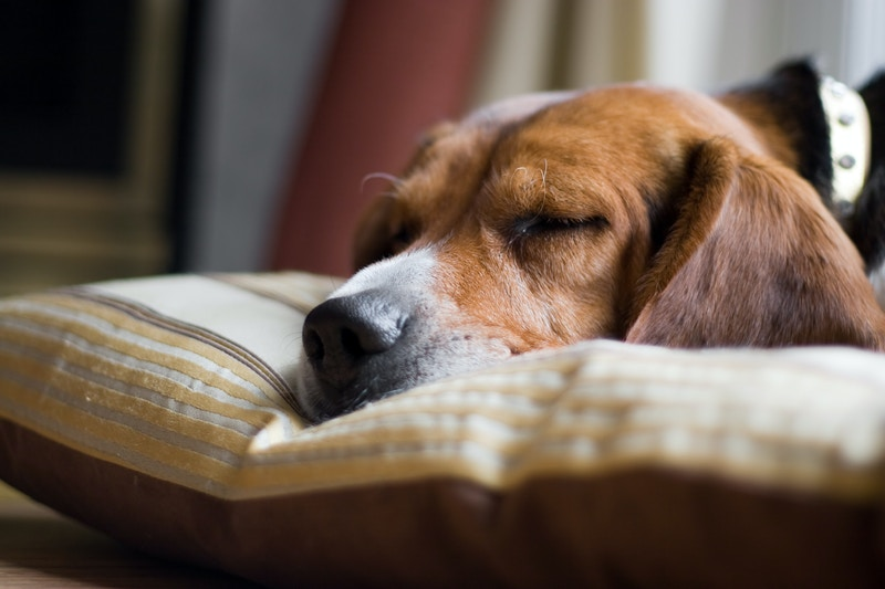 Importance of spaying and neutering your pet