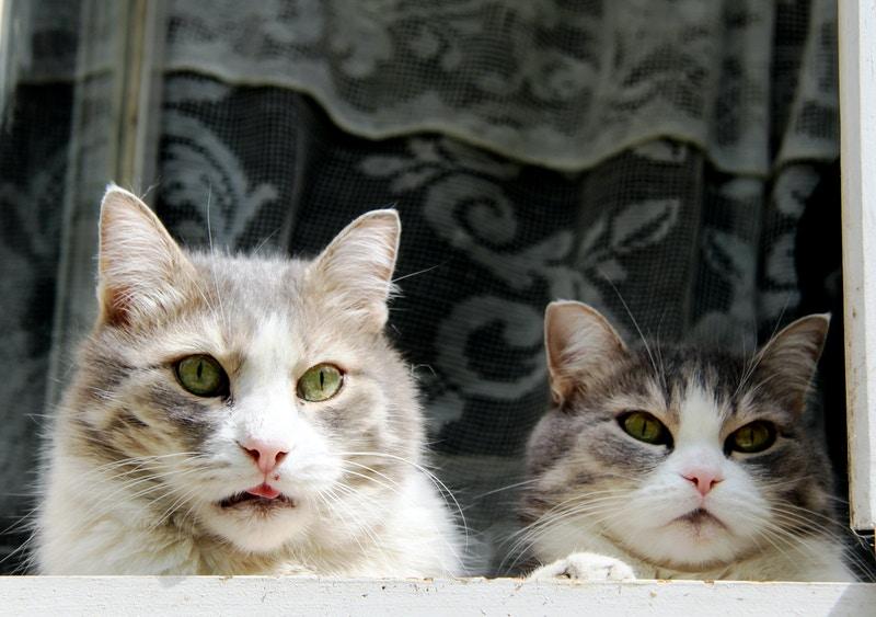 Parma veterinarians
