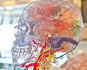 Concussion Study