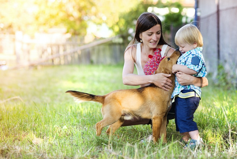 Signs of cancer in pets