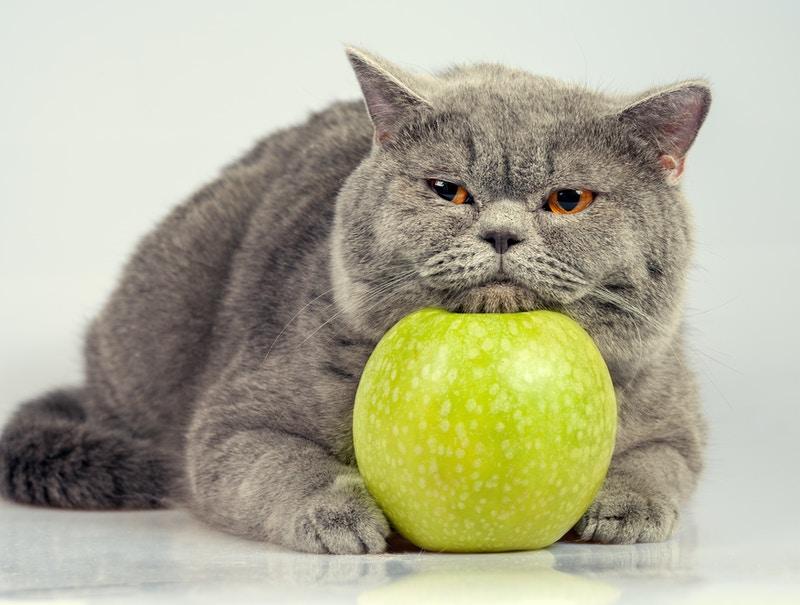 Cat health insurance