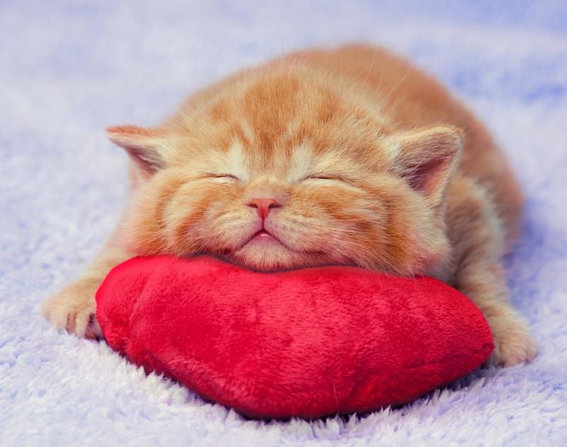 Veterinarian advice for cats