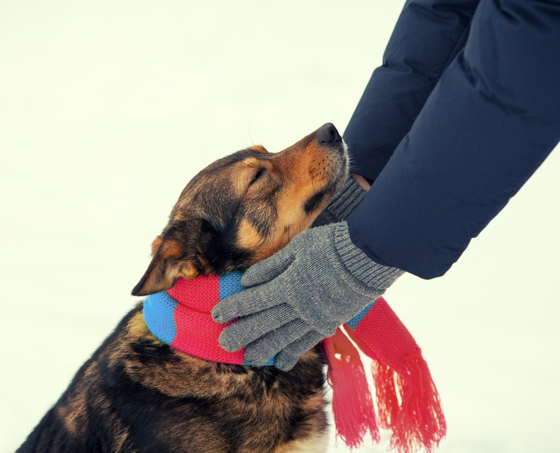 Shampoo for dogs with dry skin