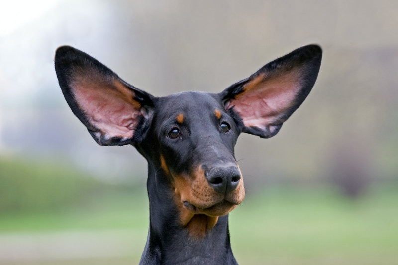 Plans for pet insurance