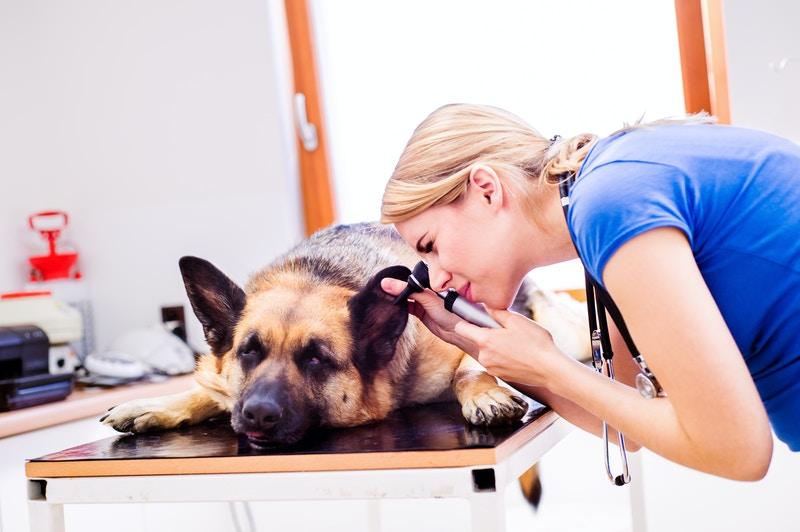 Vet insurance for dogs
