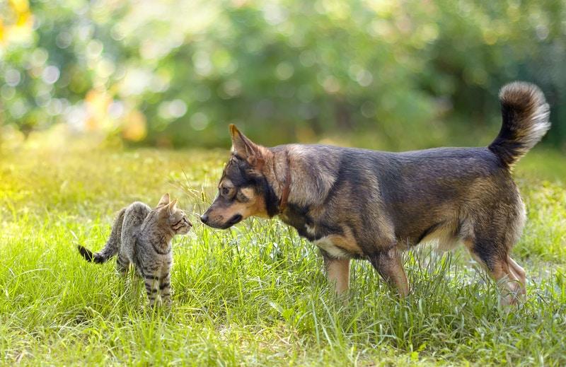 Insurance for older pets