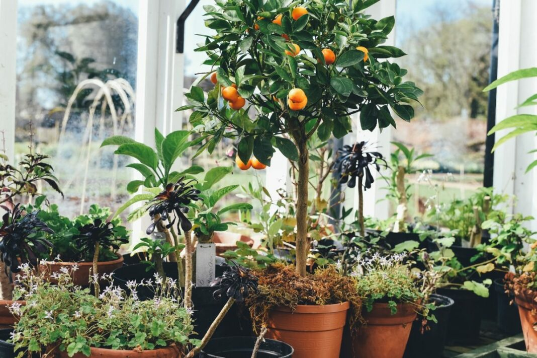Apartment Gardening Tips for Small Spaces