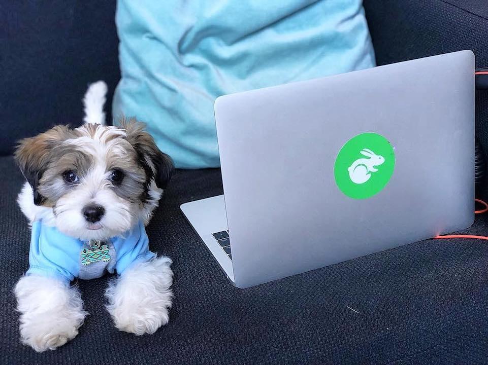TaskRabbit logo on laptop with dog next to it