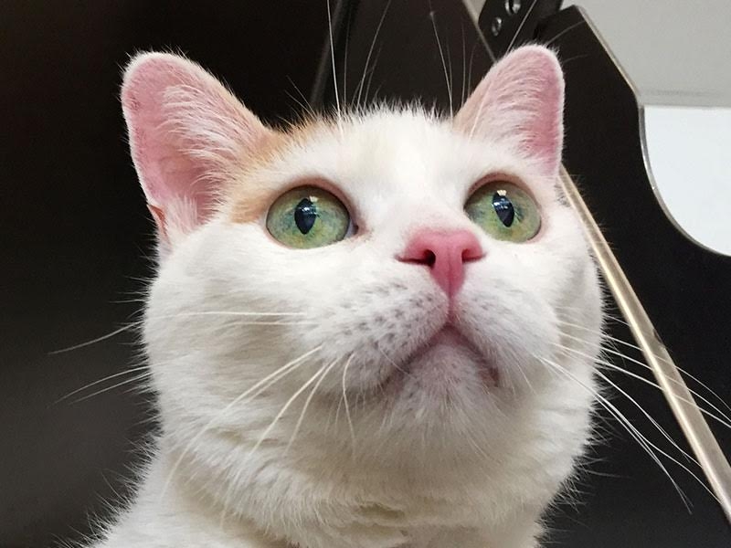 The New Classical FM Pet of the Week: Smudge featured image