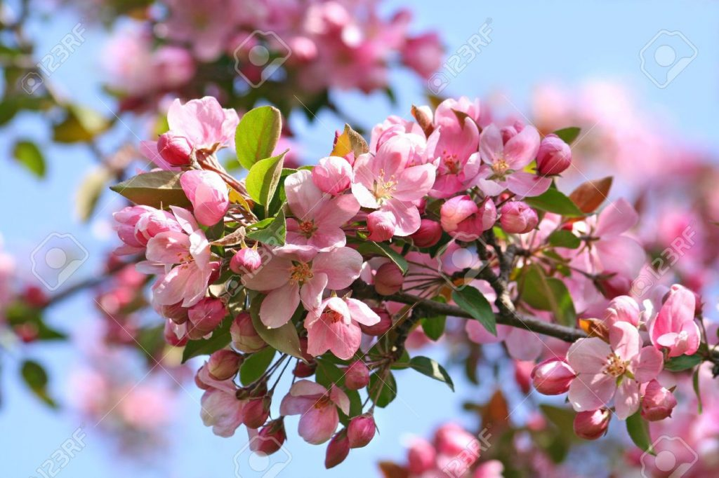 """It's Apple Blossom """"Tyme"""" In The Village Of Colborne featured image"""