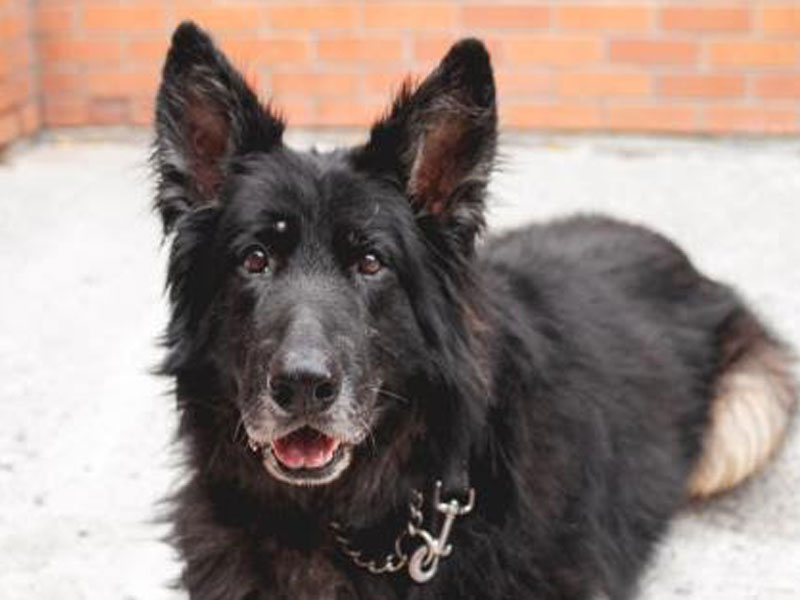 The New Classical FM Pet of the Week: Lincoln the 10-year-old male dog featured image