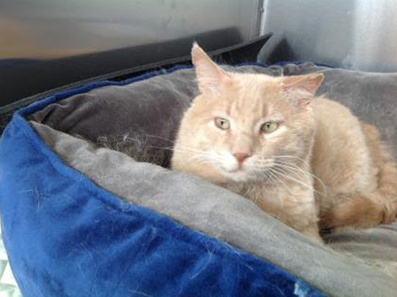 The New Classical FM Pet of the Week: JayJay the 8-year-old male cat featured image