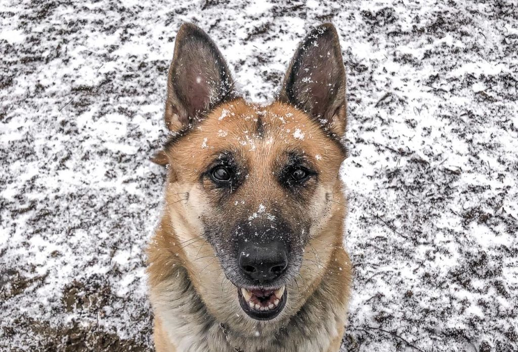The New Classical FM Pet of the Week: 5-year-old Sheba featured image