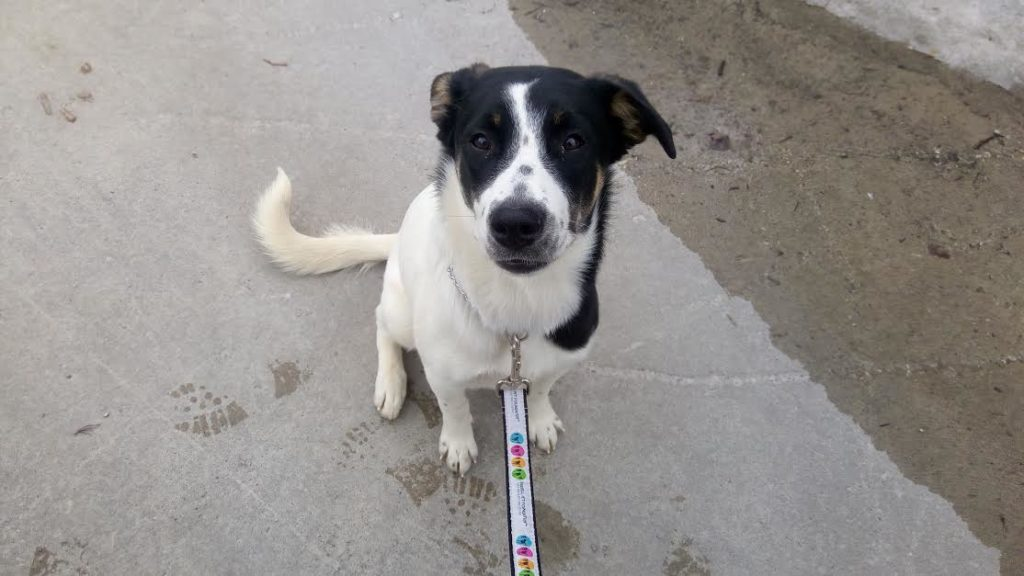 The New Classical FM Pet of the Week: 10 month old Pepper featured image