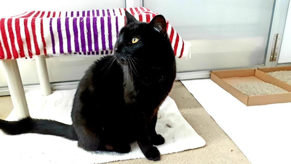 The New Classical FM Pet of the Week: 8-year-old Titus featured image