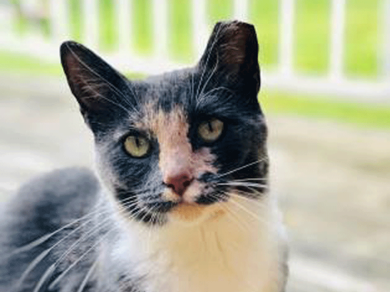The New Classical FM Pet of the Week: 3-year-old Monami featured image