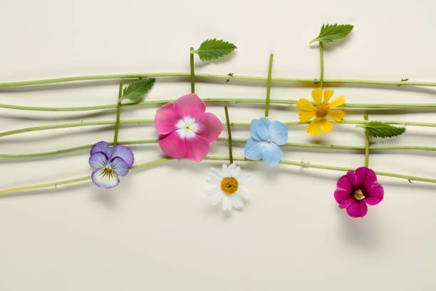 Top 5 Classical Music written for Spring heard on The New Classical FM featured image