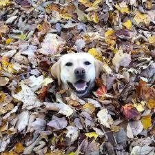 Joy distraction: Stella's best leaf jummps featured image