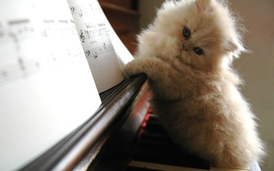 Our Top 3 Classical Kittens of The Week