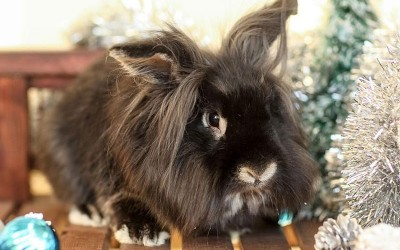 The New Classical FM's Pet of the Week – Dennis