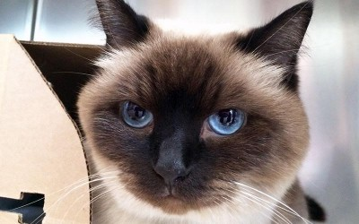 The New Classical FM's Pet of the Week: Sadie