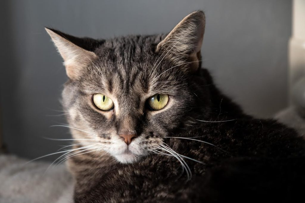 The New Classical FM Pet of the Week: Sabrina featured image