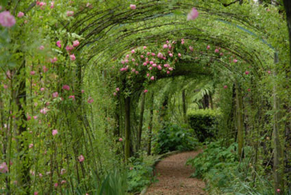 Five Tips For A Beautiful Garden - Everything Zoomer - Boomers