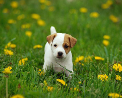 Pin Short Hair Non Shedding Small Dogs on Pinterest