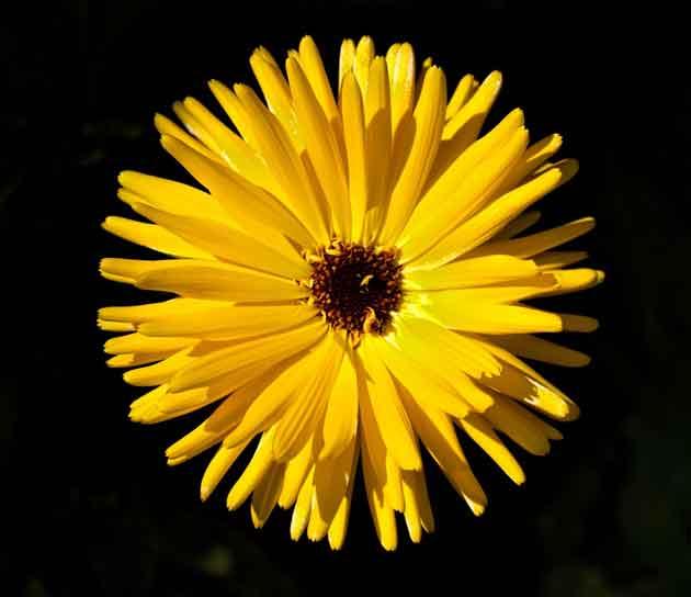 photo--flower-1414109918748-922adee5554a