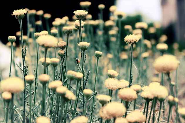 photo--weeds-1432972648409-302a74c6b074