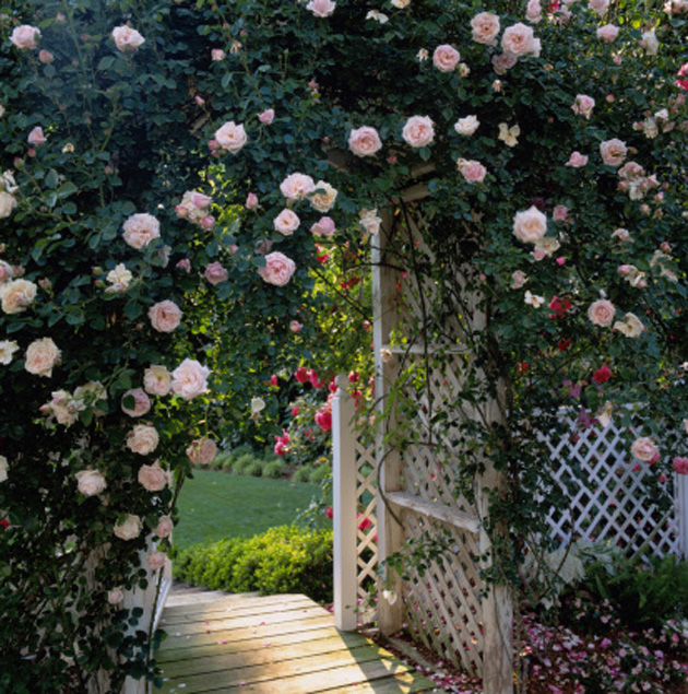 8 tips to create a picture perfect english cottage garden for Old age home landscape design