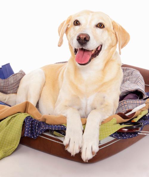 dog-packing