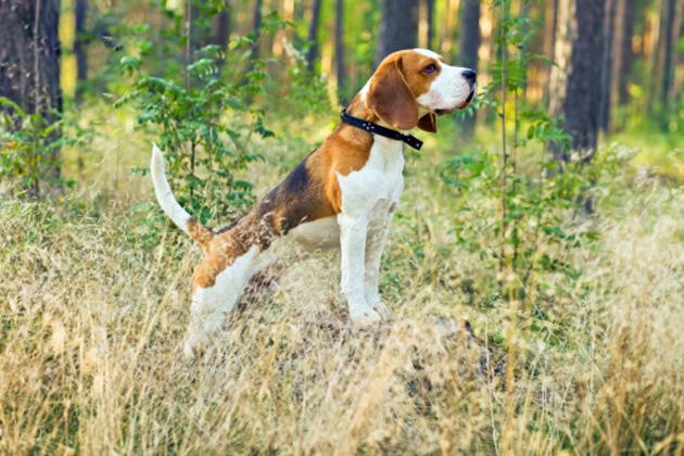 dog-woods