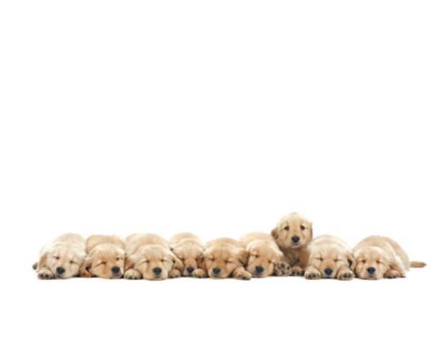 puppies-2