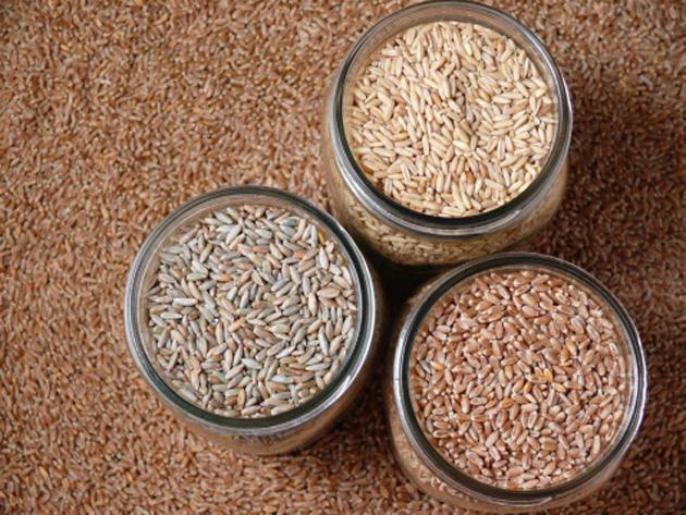 food-4-grains
