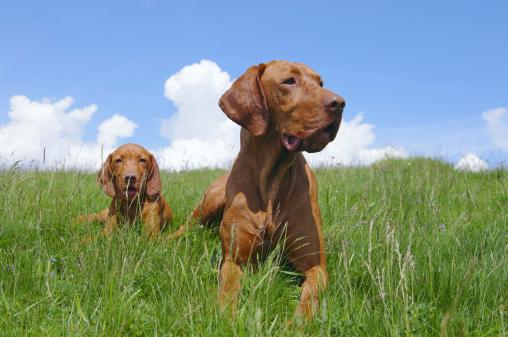 pets-dog-grass-2