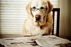 pets-dog-newspaper