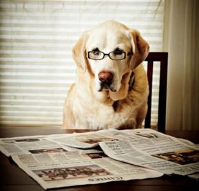 pets-dog-newspaper