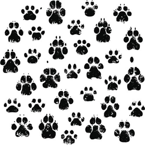 pets-paw-prints
