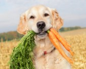 dog-healthy-diet